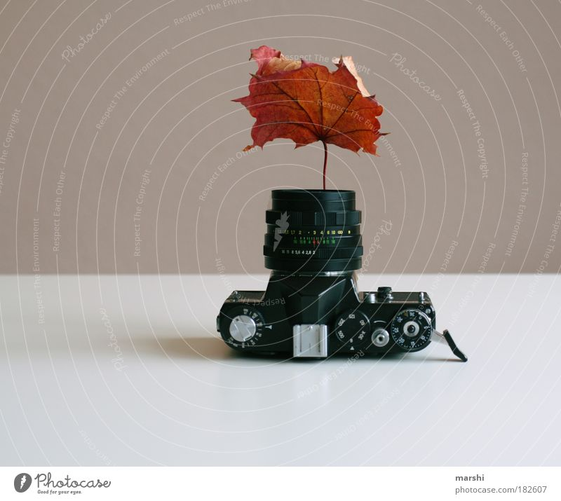 Nature Leaf Autumn Brown Photography Growth Kitsch Camera Exceptional Analog Take a photo Vase Autumn leaves Rachis Autumnal