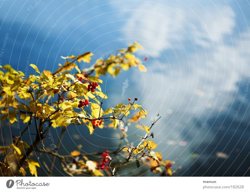 Nature Water Sky Blue Plant Calm Yellow Relaxation Autumn Lake Landscape Design Gold Fresh Bushes Change