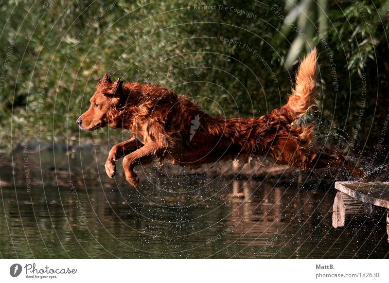 Jump! Colour photo Exterior shot Deserted Reflection Sunlight Motion blur Animal portrait Forward Pet Dog 1 Water Joy Joie de vivre (Vitality) Anticipation
