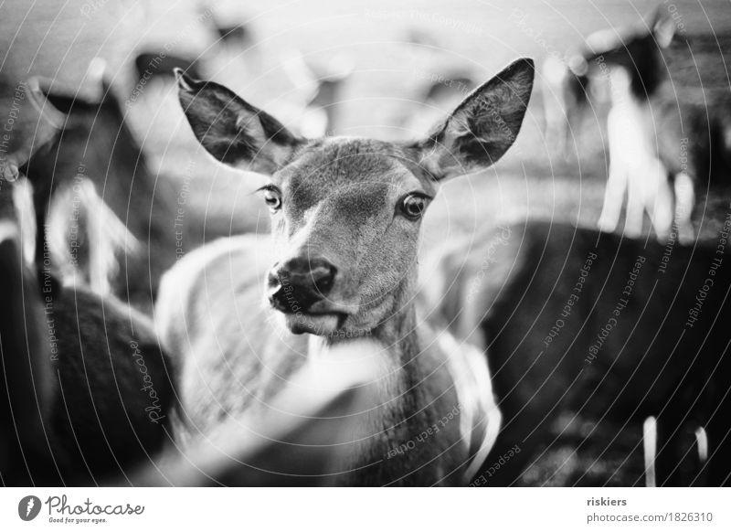 Nature Animal Environment Autumn Illuminate Wild animal Group of animals Curiosity Herd Roe deer Doe eyes