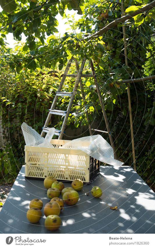 Nature Green Tree Eating Autumn Healthy Garden Food Fruit Fresh Sweet Fitness Harvest Apple Fragrance Storage