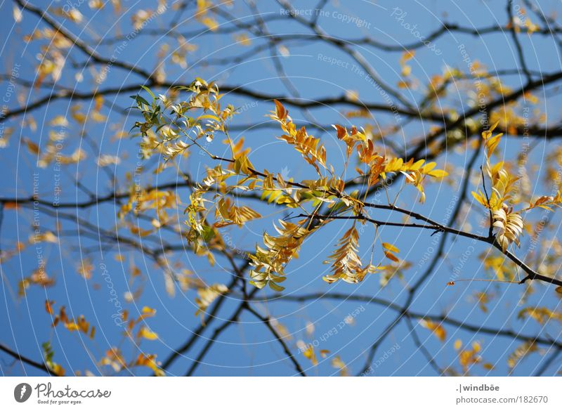 Sky Nature Old Green Beautiful Red Leaf Black Environment Yellow Warmth Autumn Exceptional Brown Park Dream