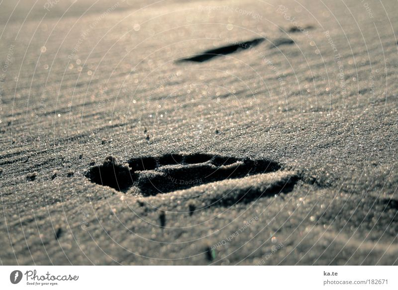Calm Beach Relaxation Far-off places Movement Sand Feet Brown Going Beautiful weather Free Well-being Footprint Barefoot Tracks