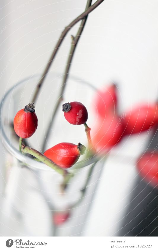 Dancing Rosehips Design Exotic Life Harmonious Decoration Environment Nature Autumn Plant Rose hip Berries Twigs and branches Bouquet Glass Hip & trendy Modern