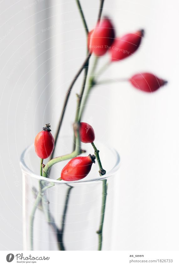 Red Rosehips Lifestyle Style Design Wellness Harmonious Decoration Thanksgiving Environment Nature Autumn Plant Rose hip Berries Branch Bouquet Glass Modern