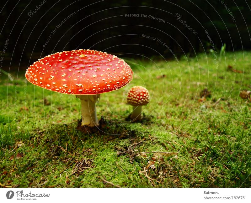 fairytale forest Colour photo Multicoloured Exterior shot Copy Space top Day Light Shadow Worm's-eye view Nature Plant Autumn Grass Moss Mushroom