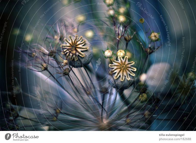 Nature Beautiful Flower Blue Plant Colour Life Grass Line Esthetic Transience Uniqueness Exceptional Poppy Bouquet Dry