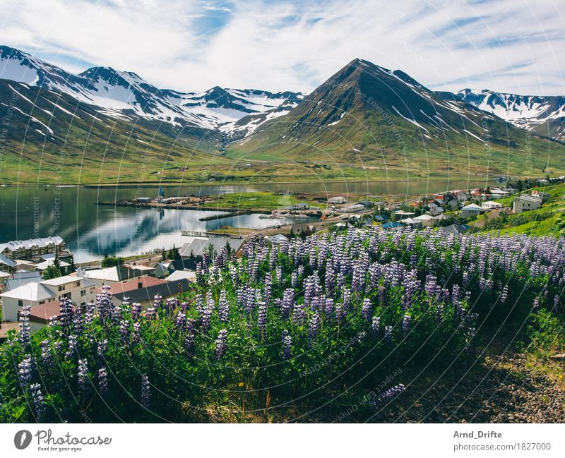Siglufjörður - Iceland Vacation & Travel Tourism Trip Adventure Sightseeing Cruise Nature Landscape Plant Sky Clouds Weather Beautiful weather Agricultural crop