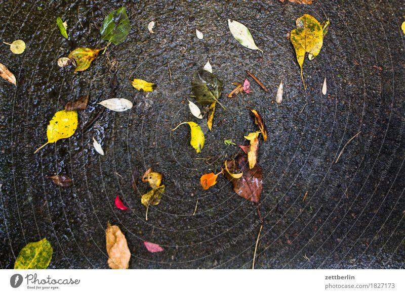 leaves Leaf Wet Autumn Asphalt Rain Rainwater Autumnal weather Autumn leaves Multicoloured Colour Cold Comfortless Copy Space Deserted Glittering