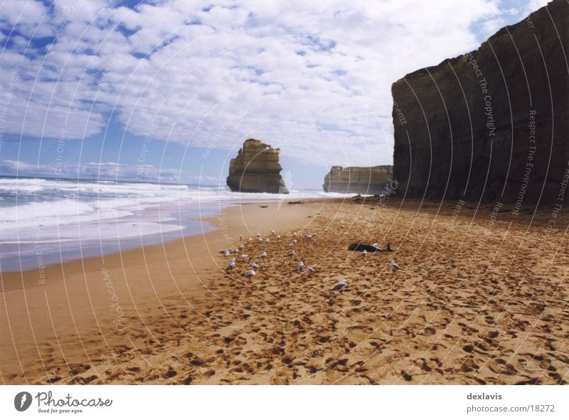 flotsam and jetsam Dolphin Ocean Seagull Beach Cliff Sand Death