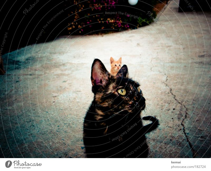 We are family Colour photo Exterior shot Twilight Central perspective Looking away Highway ramp (entrance) Asphalt Animal Pet Cat Pelt 2 Baby animal