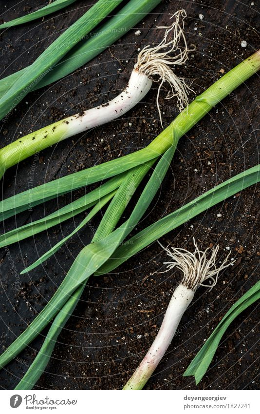 Fresh green garlic on dark wooden table Nature Green Leaf Eating Fresh Herbs and spices Vegetable Odor Vegetarian diet Aromatic Raw Ingredients Spicy Organic Garlic Leek