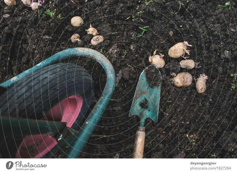 Planting potatoes in small bio garden Nature Natural Garden Earth Growth Fresh Ground Vegetable Farm Agriculture Gardening Root Raw Potatoes Organic