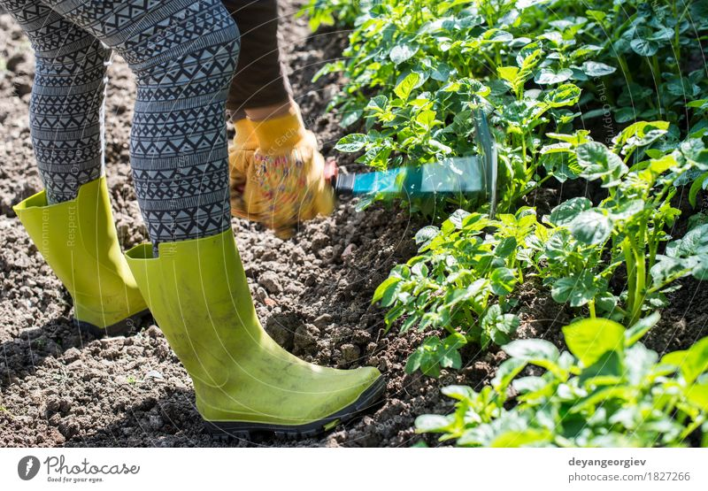 Hoeing potatoes in home garden Human being Man Plant Summer Green Hand Adults Garden Work and employment Earth Ground Farm Agriculture Tool Farmer Gardening