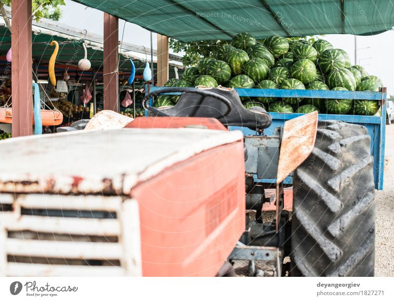 Watermelons in the trailer of a tractor Fruit Dessert Nutrition Diet Summer Nature Tractor Trailer Fresh Delicious Natural Juicy Green Red Water melon market