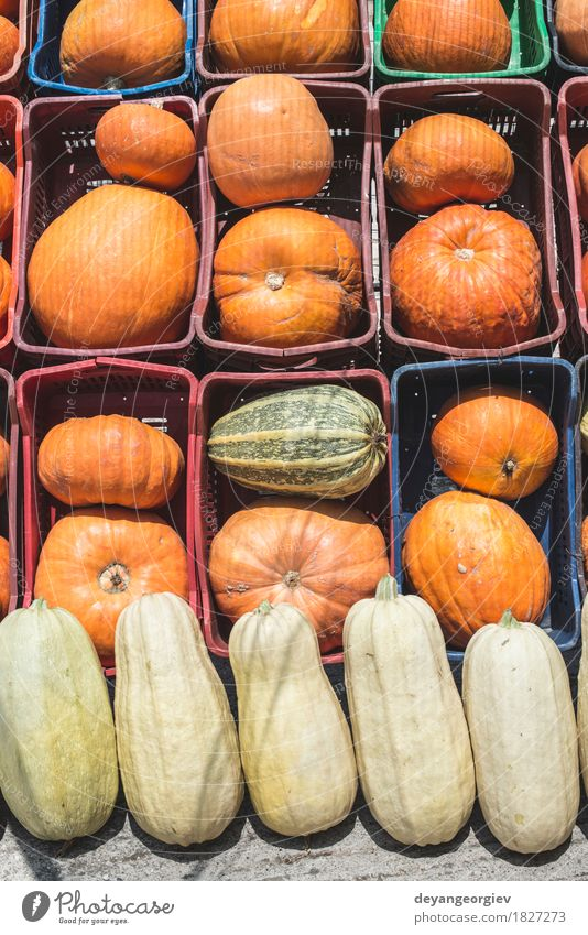 Pumpkins on the market Vegetable Decoration Thanksgiving Hallowe'en Autumn Fresh fall background Harvest food Farm orange patch agriculture seasonal squash