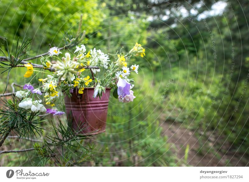 Bucket with wildflowers in the forest Beautiful Summer Woman Adults Nature Flower Blossom Meadow Bouquet Bright Wild Green Hold Beauty Photography background