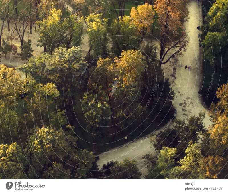 Nature Tree Green Yellow Forest Autumn Lanes & trails Park Earth To go for a walk Aerial photograph