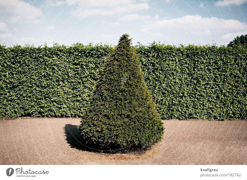 cone fir Fir tree Hedge Garden Park Sky Clouds Sand To go for a walk Geometry Tree nursery Vacation & Travel Weekend Relaxation Calm Horticulture Nature