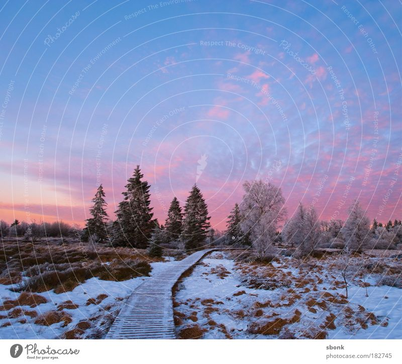 Sky Tree Winter Clouds Loneliness Cold Snow Grass Night Lanes & trails Evening Landscape Ice Sunset Pink Environment