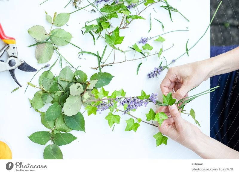 Human being Woman Plant Green Beautiful White Hand Calm Adults Natural Feminine Garden Work and employment Leisure and hobbies Fresh Idyll