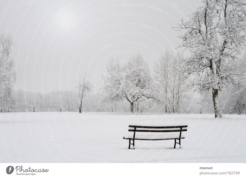 winter Senses Relaxation Calm Nature Landscape Winter Ice Frost Snow Tree Bench Park White Sadness Loneliness Cold Gloomy Fog Exterior shot Copy Space left