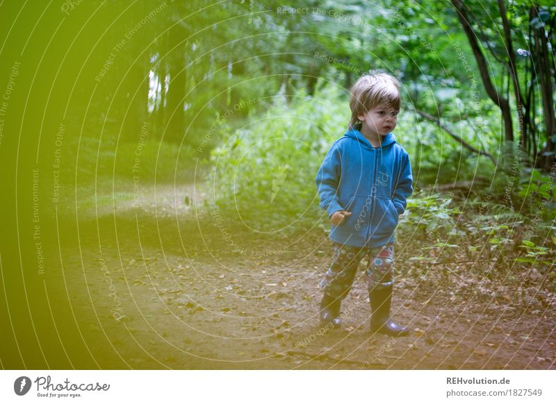Human being Child Nature Green Tree Landscape Forest Environment Lanes & trails Natural Boy (child) Small Going Masculine Hiking Trip