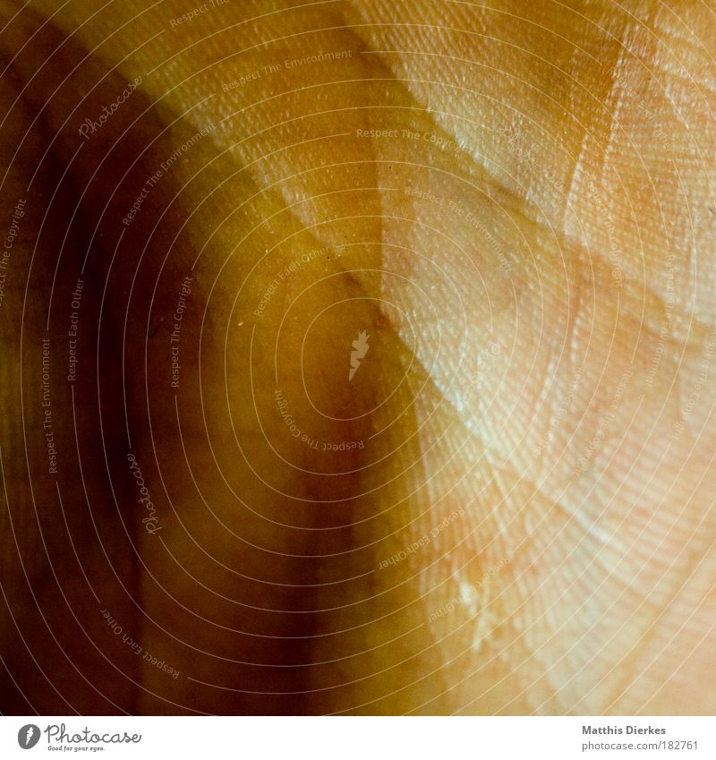 hand Hand Skin inner surface Line Life line Earmarked Crack & Rip & Tear Body Human being Close-up Macro (Extreme close-up) Brown White Shadow Sun Light