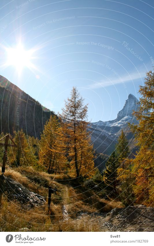 Autumn session on the Matterhorn Colour photo Exterior shot Deserted Day Sunbeam Well-being Vacation & Travel Tourism Trip Mountain Tree Stone Wood To enjoy