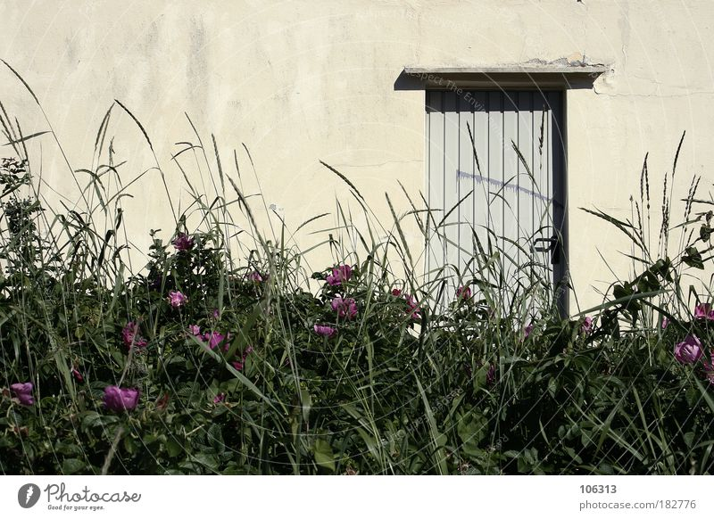 Nature Old Plant Summer Flower Calm Loneliness House (Residential Structure) Meadow Wall (building) Grass Door Flat (apartment) Bushes Idyll