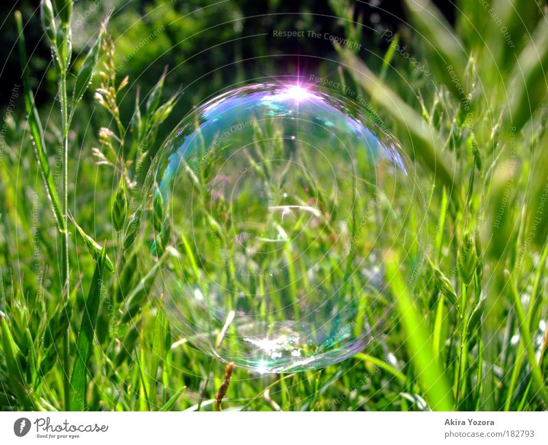 Nature Green Blue Summer Joy Meadow Grass Freedom Sunlight Reflection Glittering Pink Environment Flying