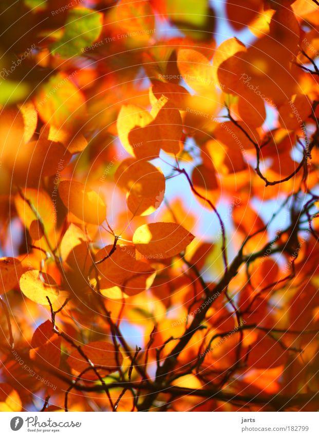 Nature Colour Leaf Calm Environment Autumn Natural Park Fresh Fantastic Beautiful weather Autumn leaves Autumnal colours