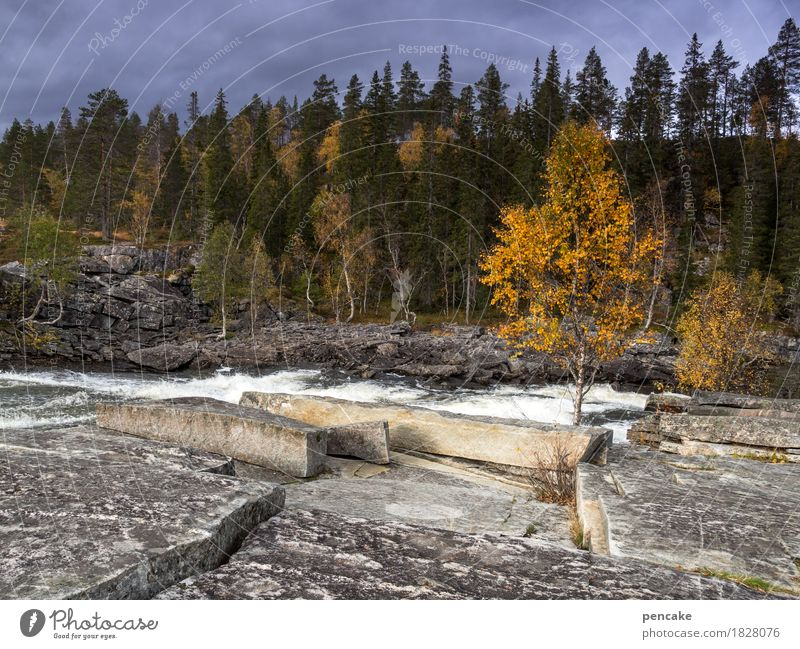Nature White Landscape Forest Autumn Movement Rock River Repeating Waterfall Norway Autumnal colours Storm clouds Birch tree Granite Hissing