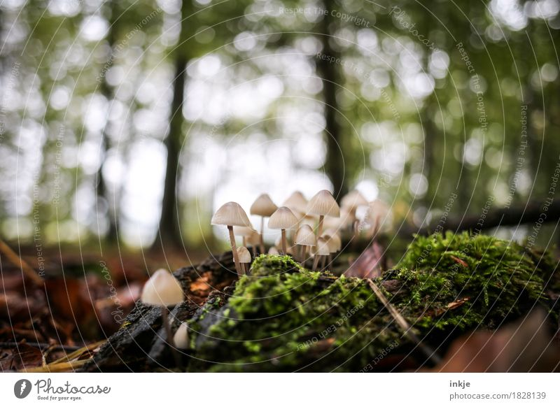 helmets Nature Plant Animal Autumn Beautiful weather Tree Moss Forest Woodground Mushroom Blur Growth Small Juicy Many Green Multiple Colour photo Exterior shot