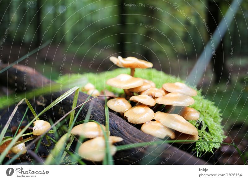 saplings Environment Nature Plant Animal Autumn Moss Forest Woodground Mushroom Growth Natural Juicy Green Multiple Inedible Colour photo Exterior shot Close-up