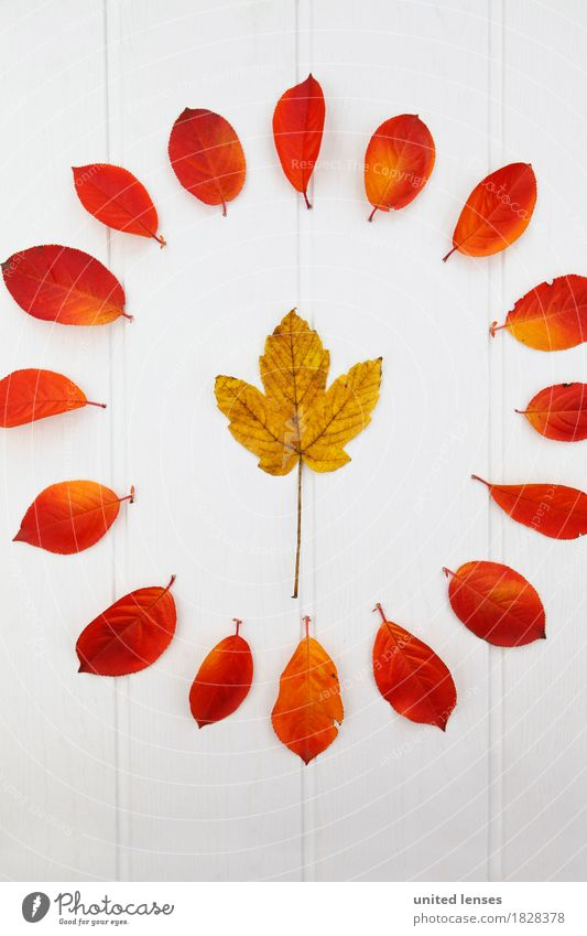 Nature Leaf Autumn Art Esthetic Circle Autumn leaves Autumnal Work of art Symmetry Maple leaf Maple tree Autumnal colours Early fall Automn wood