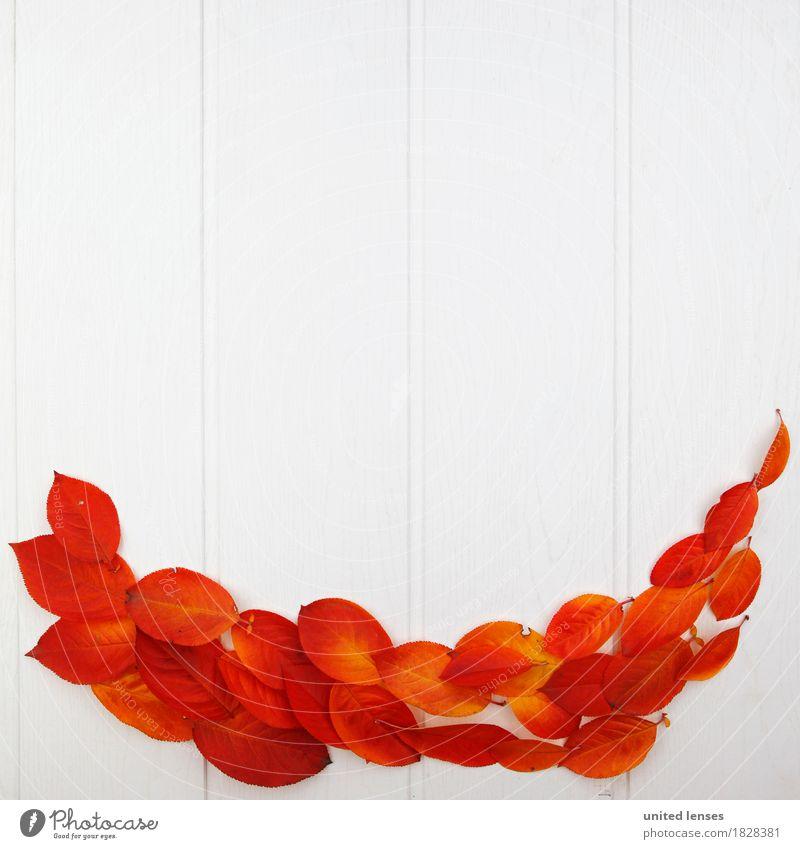 Red Leaf Autumn Art Orange Esthetic Creativity Autumn leaves Autumnal Work of art Symmetry Classification Autumnal colours Early fall Automn wood