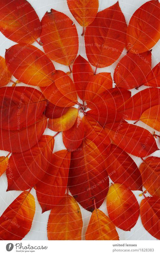 AK# Autumn and its leaves III Art Work of art Esthetic Symmetry Red Orange Colour Play of colours Colour palette Color gradient Leaf Deciduous tree Autumnal