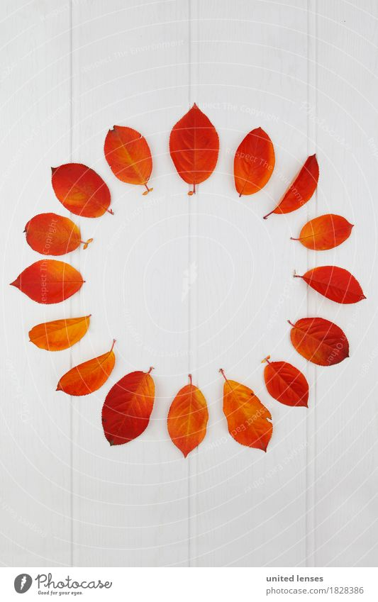 AK# Autumn and its leaves I Art Work of art Symmetry Seasons Autumnal Autumn leaves Autumnal colours Early fall Leaf Design Fashioned Red Many 16 Circle