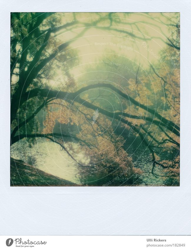 Nature Water Beautiful Tree Calm Loneliness Far-off places Relaxation Autumn Grass Happy Dream Park Contentment Free Polaroid