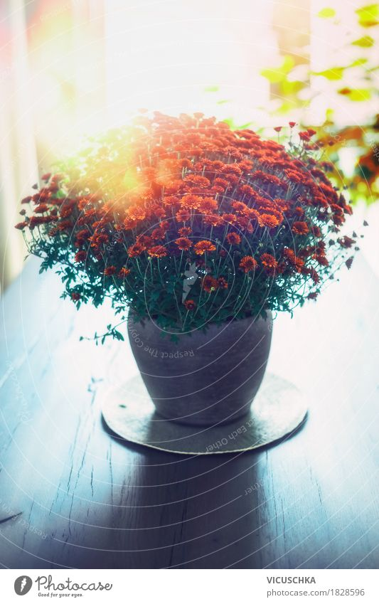 Flowers in a vase on the table Lifestyle Style Design Living or residing Flat (apartment) Interior design Decoration Table Nature Plant Leaf Blossom Bouquet