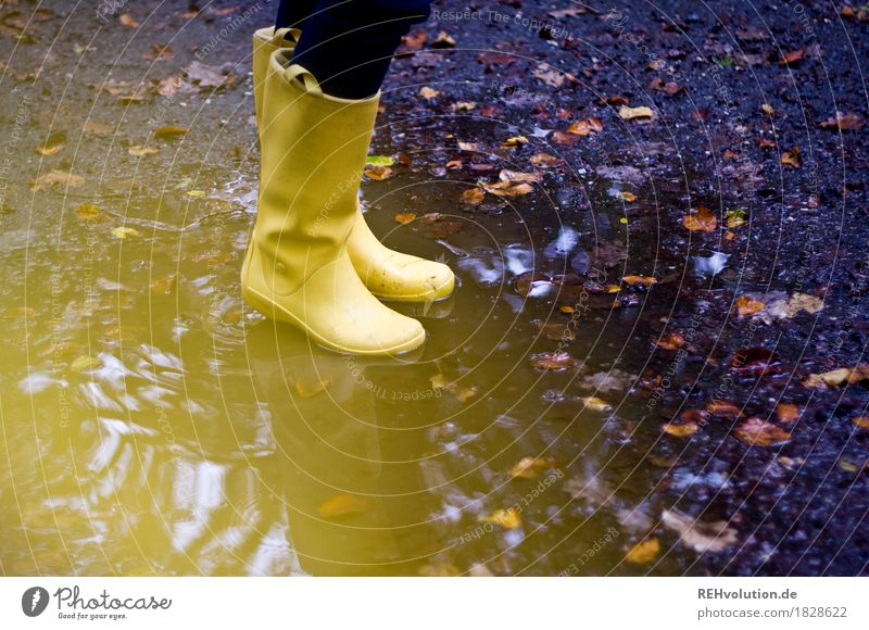 the yellow rubber boots Feminine Feet 1 Human being Autumn Weather Bad weather Leaf Rubber boots Water Stand Hip & trendy Wet Joy Joie de vivre (Vitality)