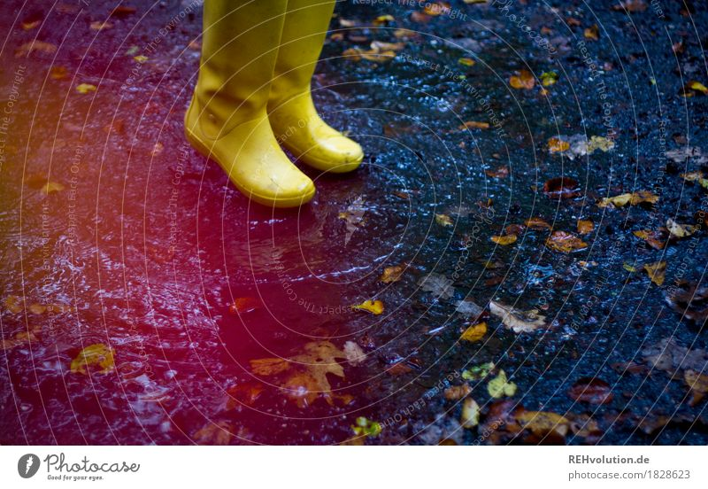 Yellow rubber boots Feet 1 Human being Environment Nature Autumn Weather Bad weather Rain Leaf Rubber boots Jump Authentic Free Friendliness Happiness Wet Joy