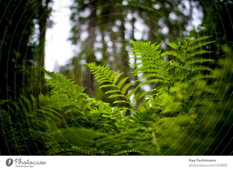Nature Green Beautiful Plant Summer Forest Fern