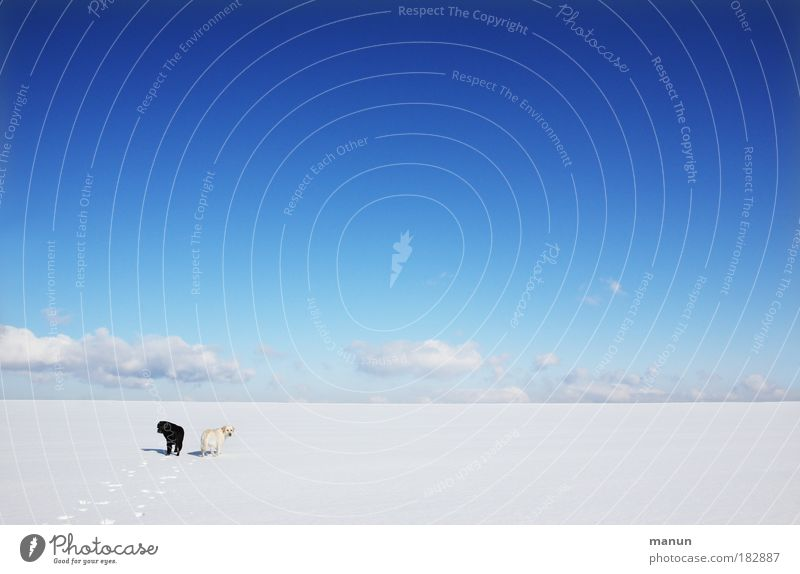 Nature Sky White Blue Winter Calm Loneliness Far-off places Snow Relaxation Dog Landscape Friendship Ice Together Hiking