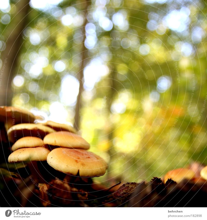 Nature Tree Plant Loneliness Leaf Calm Relaxation Forest Autumn Grass Beautiful weather Bushes To enjoy Mushroom Moss Poison