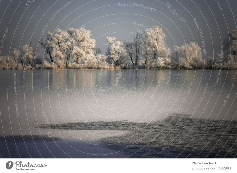 Nature Water Beautiful White Tree Blue Plant Winter Loneliness Far-off places Forest Cold Dream Sadness Lake Landscape
