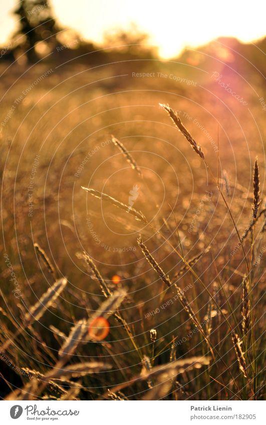 evening setting Trip Far-off places Summer Nature Landscape Plant Sunrise Sunset Grass Desert Outback Australia New South Wales Colour photo Exterior shot
