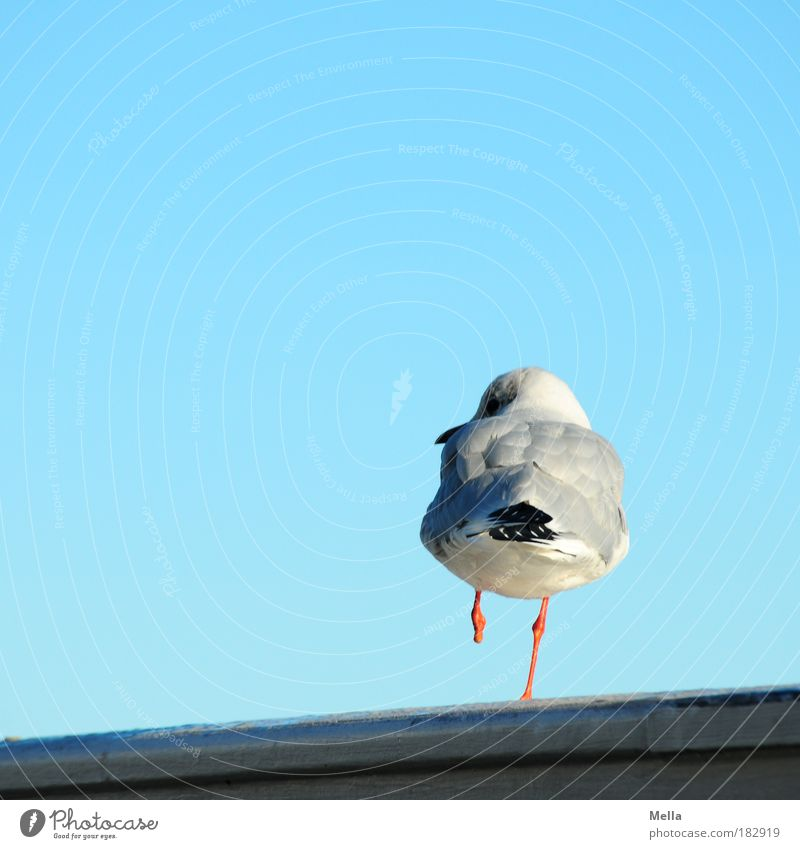 To be different Nature Sky Cloudless sky Handrail Railing Animal Wild animal Bird Seagull 1 Looking Stand Exceptional Free Uniqueness Blue Contentment