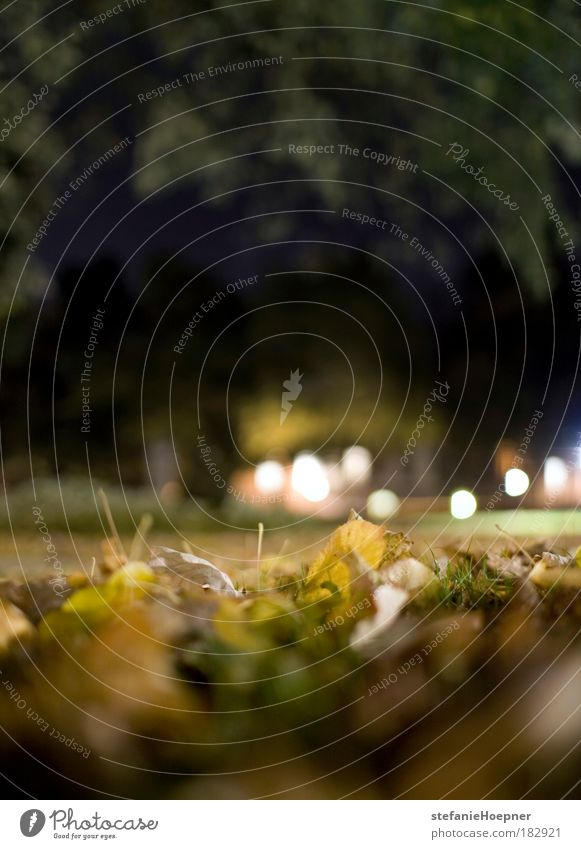 Case Framing Colour photo Exterior shot Deserted Copy Space top Copy Space bottom Night Shallow depth of field Worm's-eye view Nature Plant Autumn Leaf Park